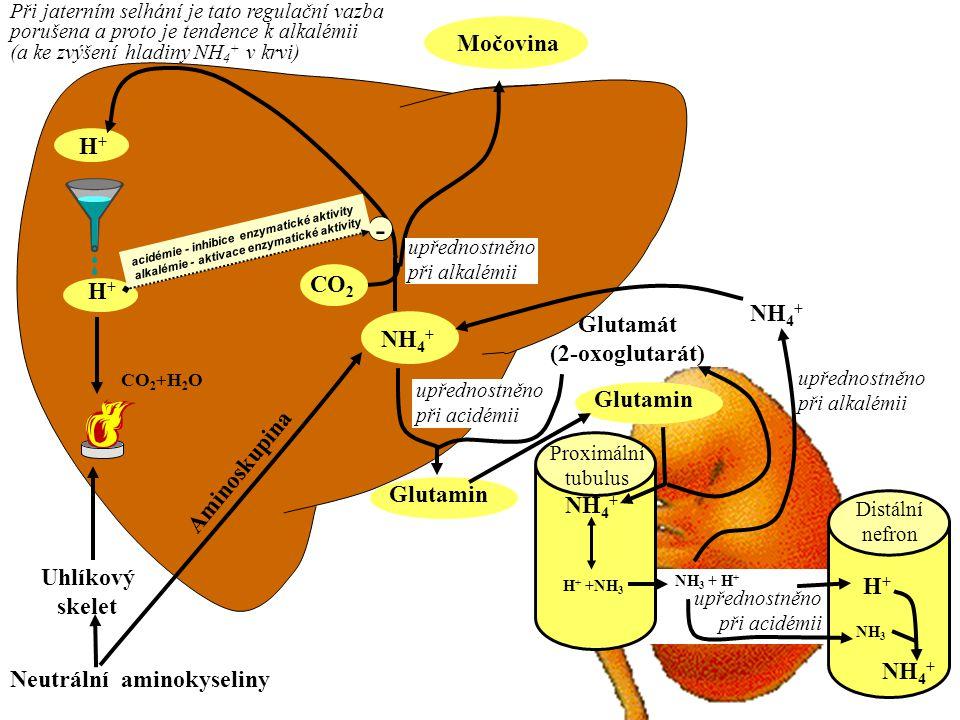 Neutrální aminokyseliny