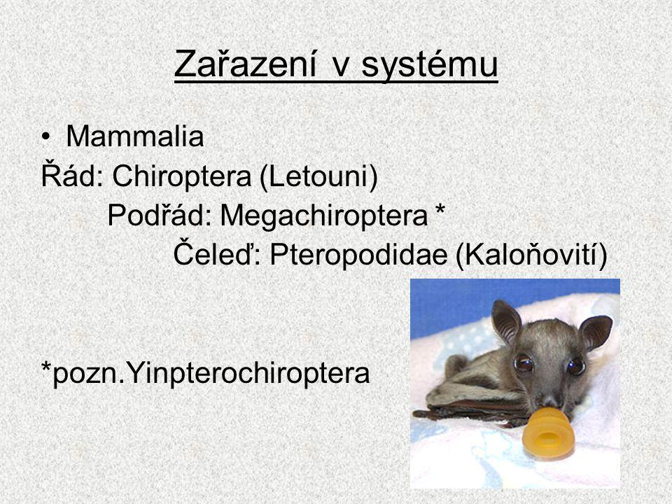 Zařazení v systému Mammalia Řád: Chiroptera (Letouni)