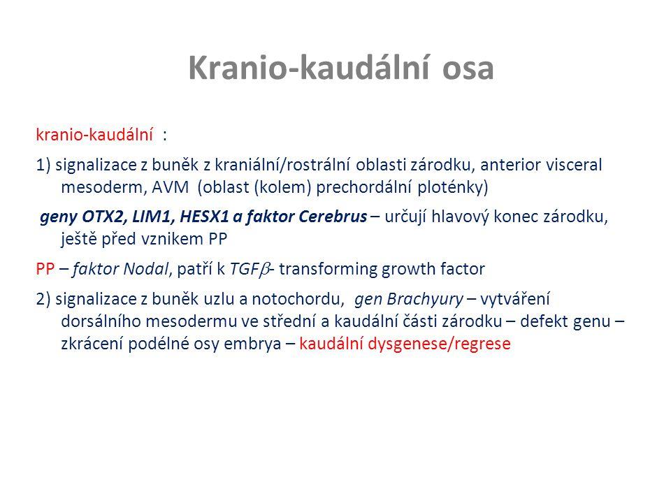 Kranio-kaudální osa