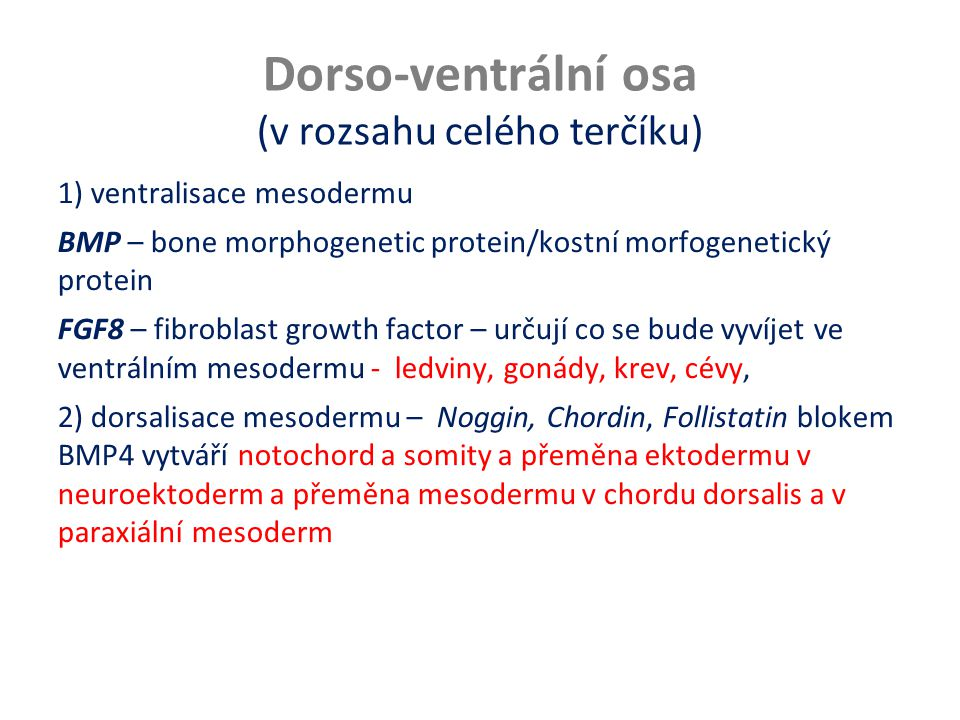 Dorso-ventrální osa (v rozsahu celého terčíku)