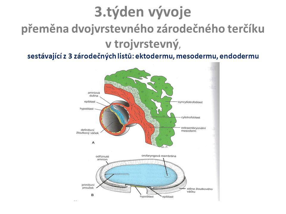 3.týden vývoje přeměna dvojvrstevného zárodečného terčíku v trojvrstevný, sestávající z 3 zárodečných listů: ektodermu, mesodermu, endodermu (gastrulace)