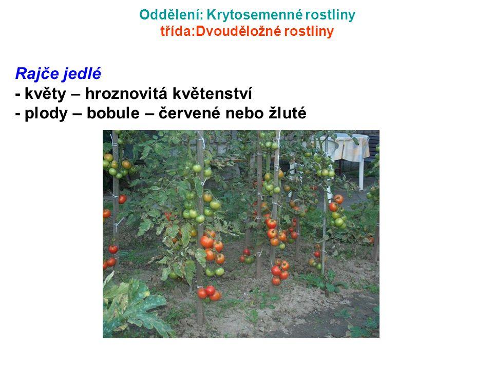 Oddělení: Krytosemenné rostliny třída:Dvouděložné rostliny