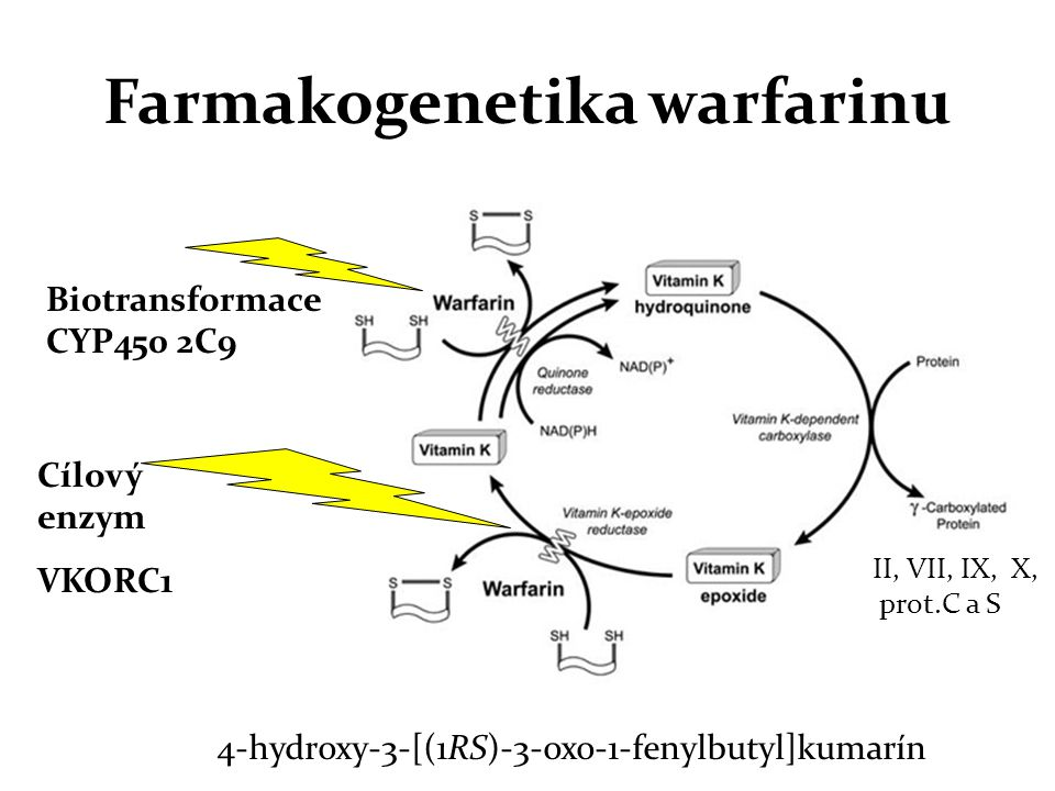 Farmakogenetika warfarinu