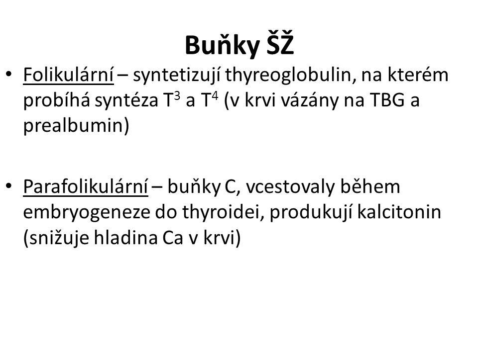 Buňky ŠŽ Folikulární – syntetizují thyreoglobulin, na kterém probíhá syntéza T3 a T4 (v krvi vázány na TBG a prealbumin)