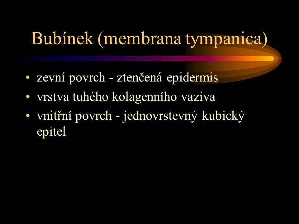 Bubínek (membrana tympanica)
