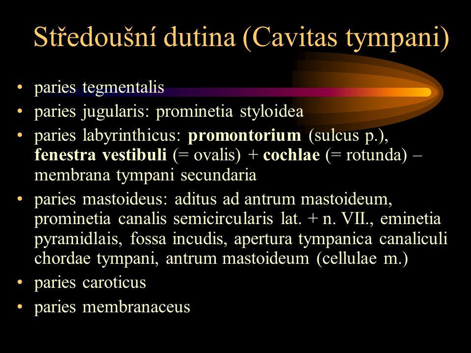 Středoušní dutina (Cavitas tympani)