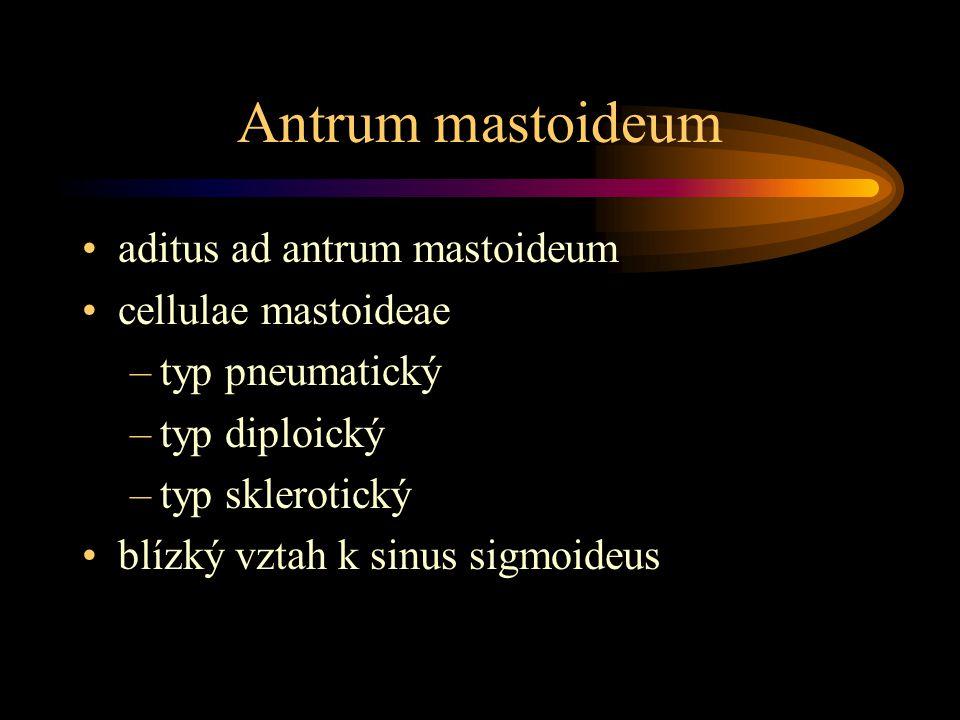 Antrum mastoideum aditus ad antrum mastoideum cellulae mastoideae