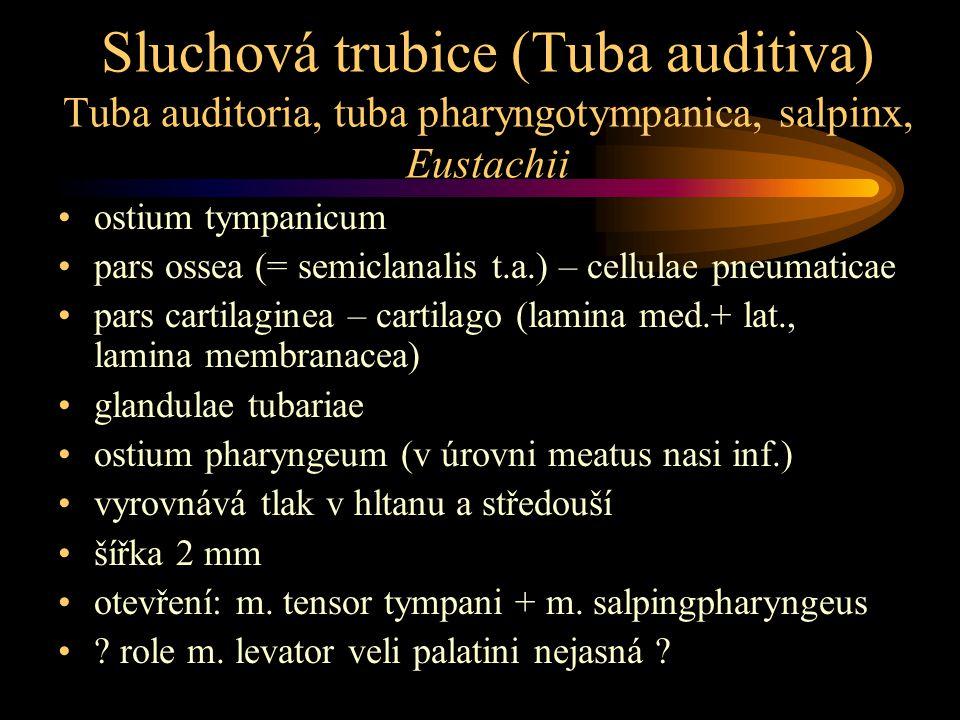 Sluchová trubice (Tuba auditiva) Tuba auditoria, tuba pharyngotympanica, salpinx, Eustachii