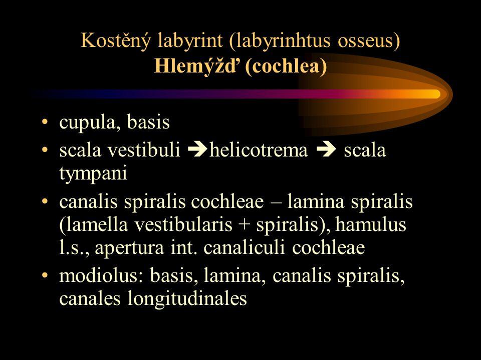 Kostěný labyrint (labyrinhtus osseus) Hlemýžď (cochlea)