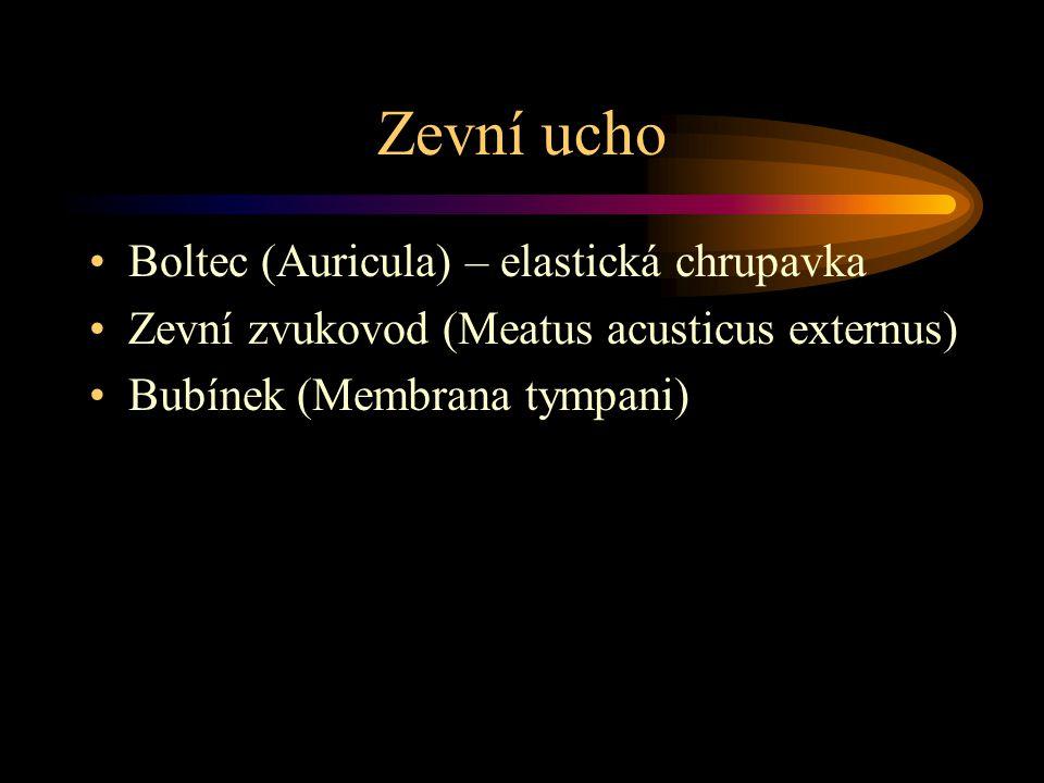 Zevní ucho Boltec (Auricula) – elastická chrupavka