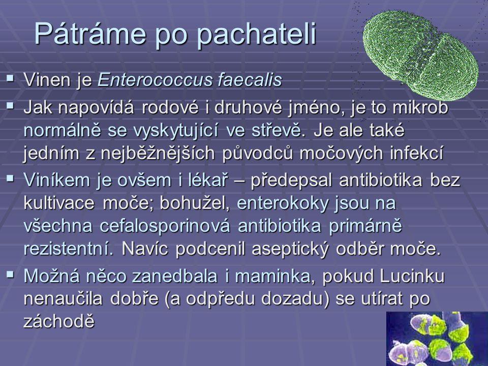 Pátráme po pachateli Vinen je Enterococcus faecalis