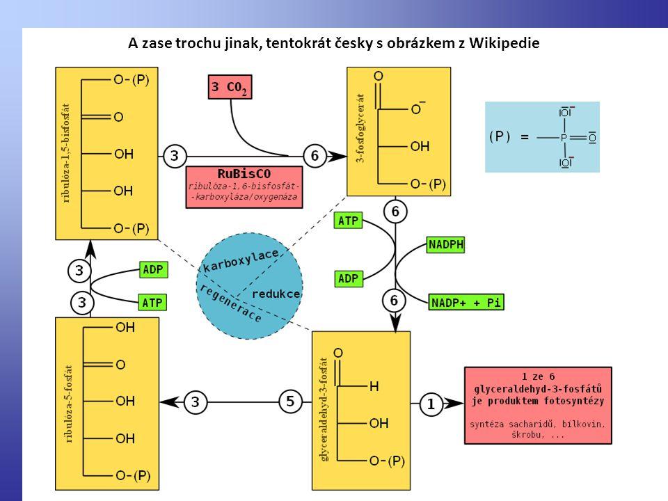 A zase trochu jinak, tentokrát česky s obrázkem z Wikipedie