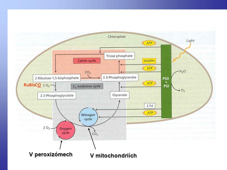 V peroxizómech V mitochondriích