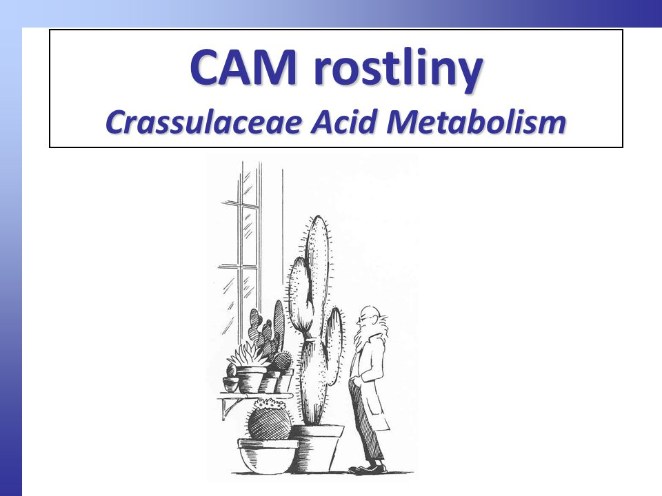 Crassulaceae Acid Metabolism