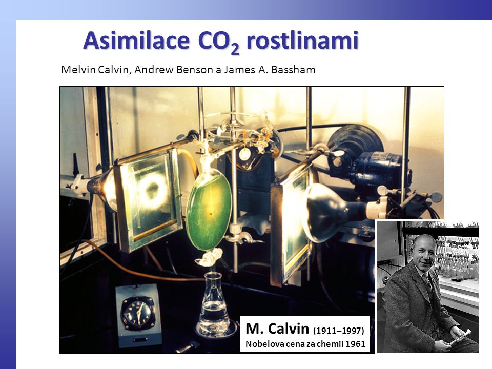 Asimilace CO2 rostlinami
