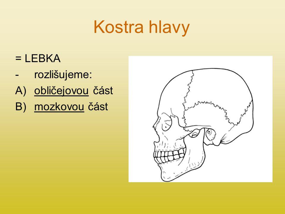 Kostra hlavy = LEBKA rozlišujeme: obličejovou část mozkovou část