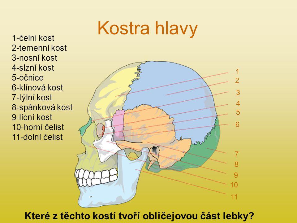 Kostra hlavy Které z těchto kostí tvoří obličejovou část lebky