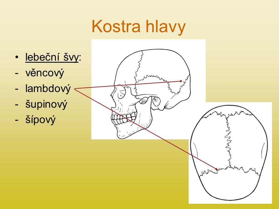 Kostra hlavy lebeční švy: věncový lambdový šupinový šípový