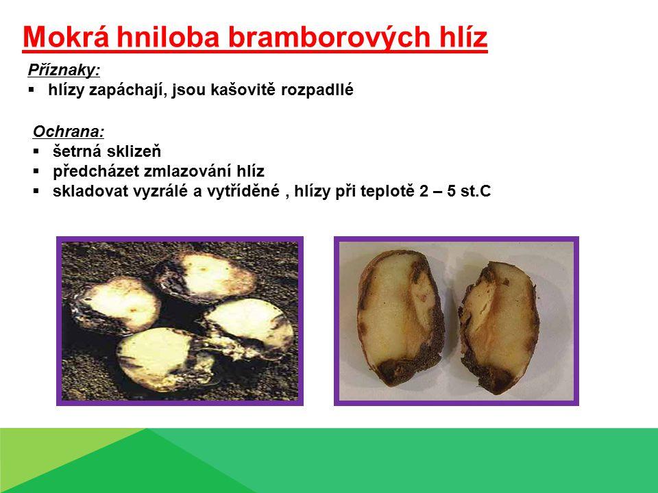Mokrá hniloba bramborových hlíz