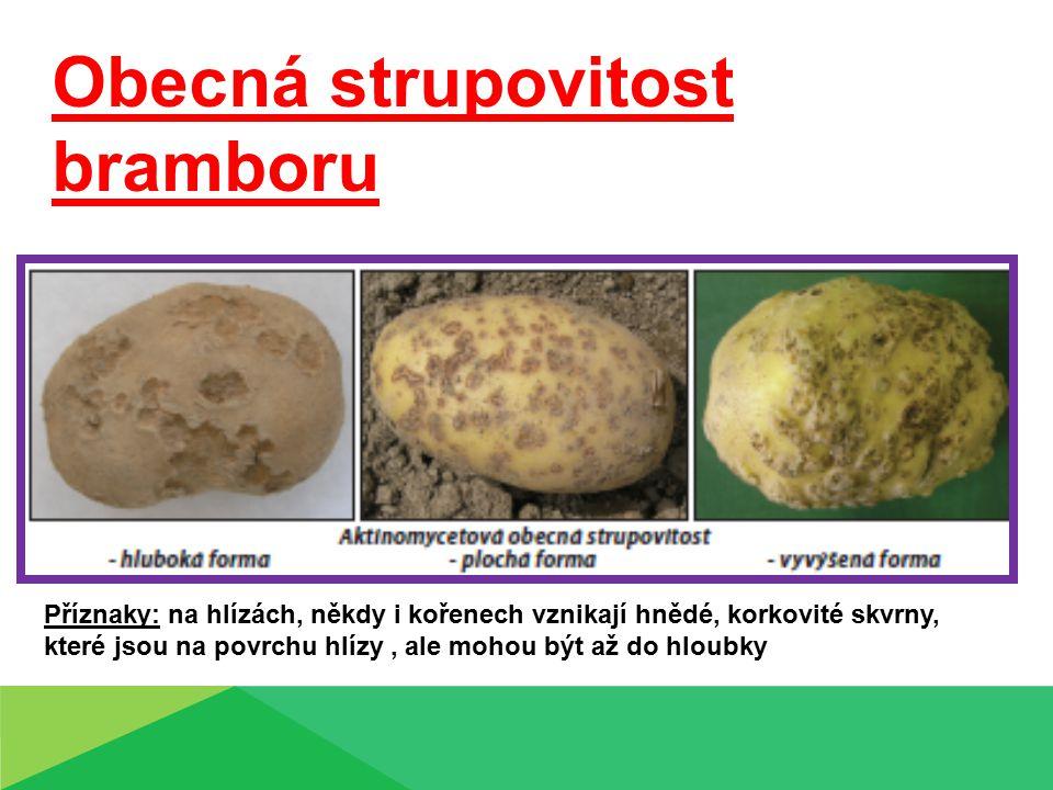 Obecná strupovitost bramboru