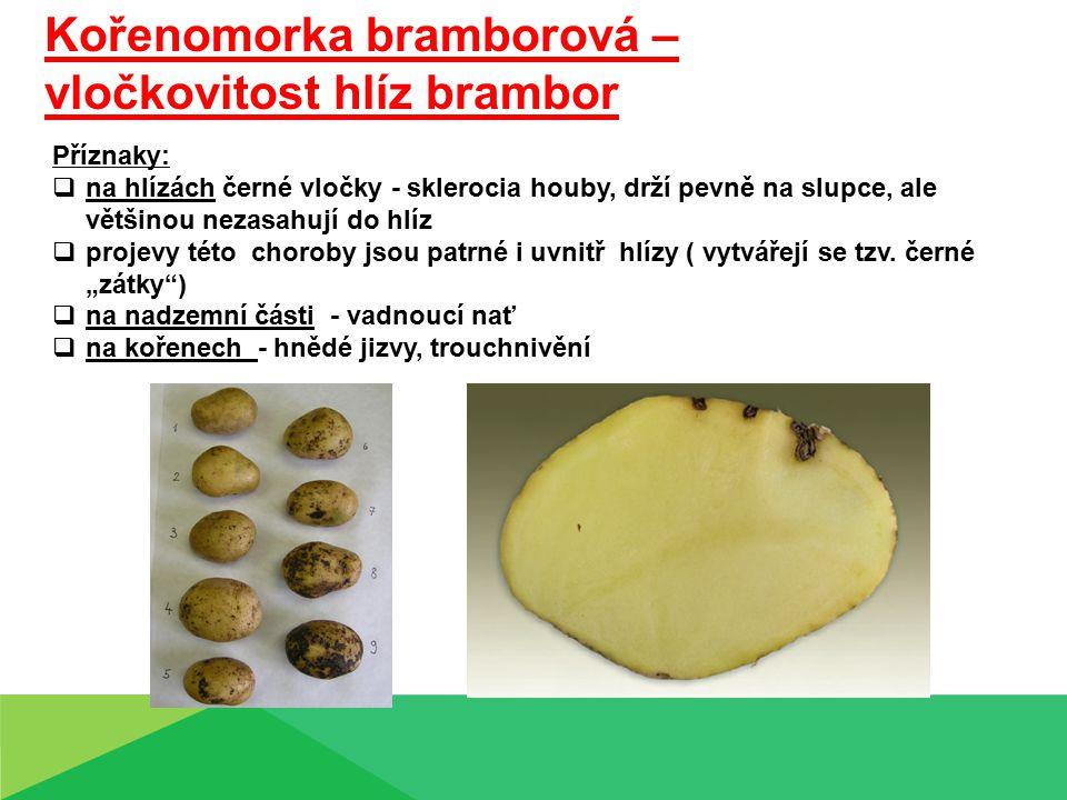 Kořenomorka bramborová – vločkovitost hlíz brambor