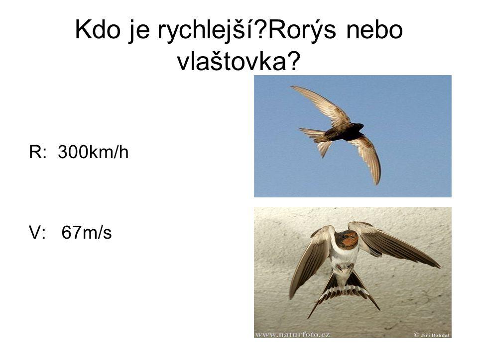 Kdo je rychlejší Rorýs nebo vlaštovka