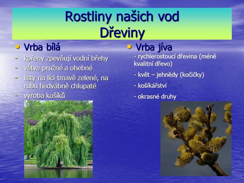 Rostliny našich vod Dřeviny