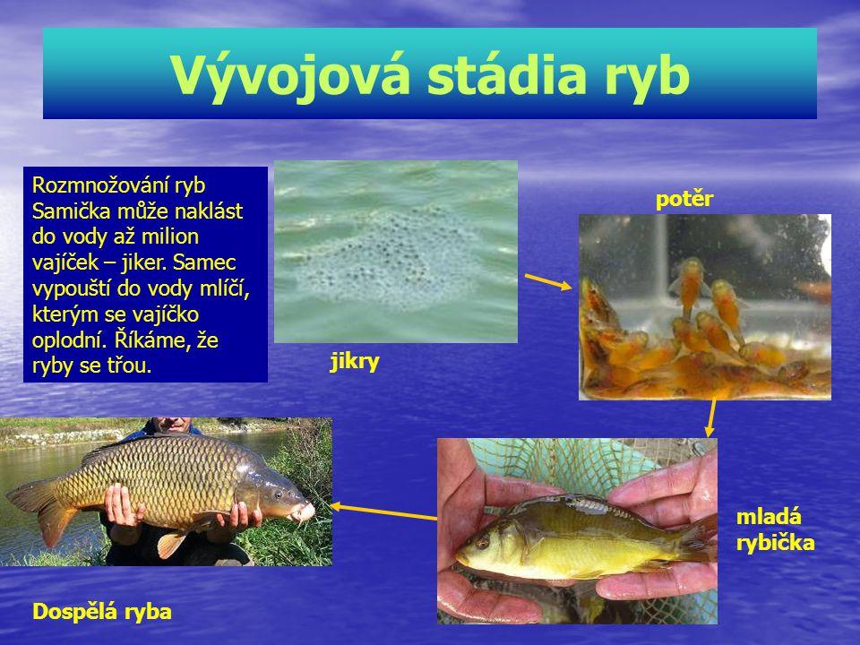 Vývojová stádia ryb Rozmnožování ryb