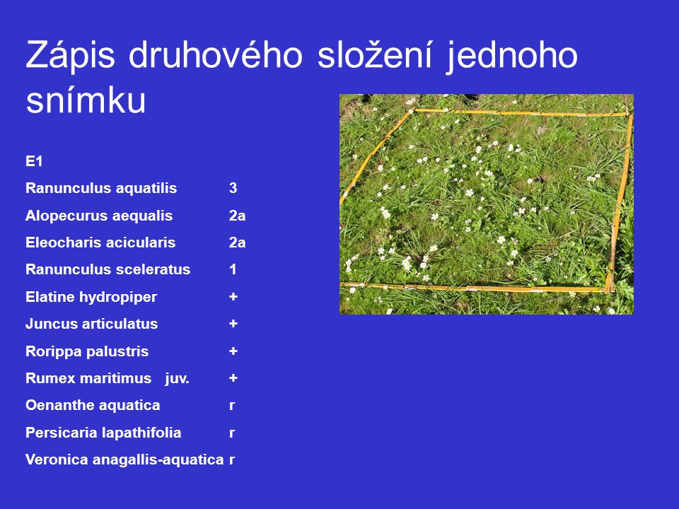 Zápis druhového složení jednoho snímku