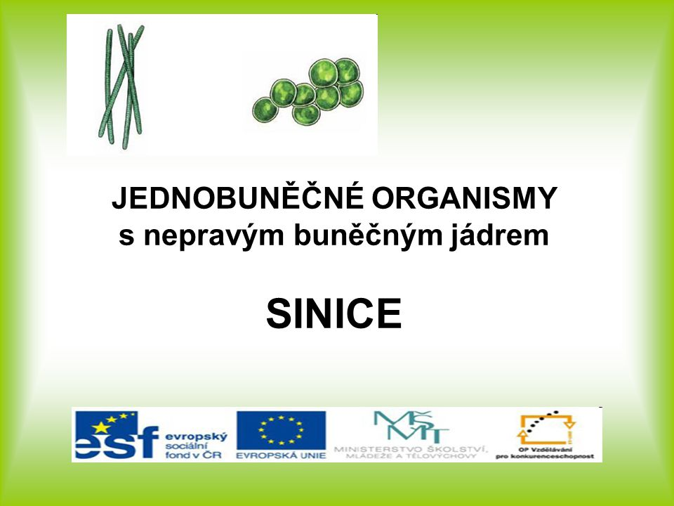 JEDNOBUNĚČNÉ ORGANISMY s nepravým buněčným jádrem SINICE