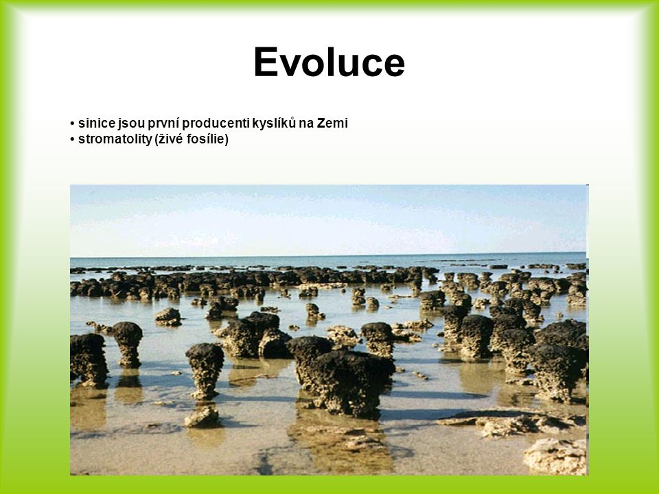 Evoluce • sinice jsou první producenti kyslíků na Zemi