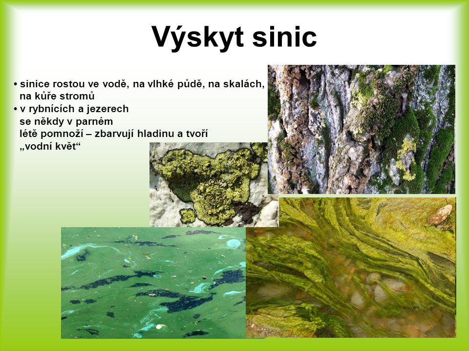 Výskyt sinic • sinice rostou ve vodě, na vlhké půdě, na skalách,