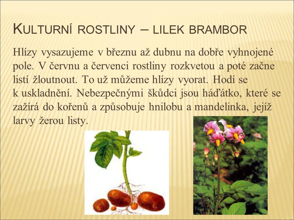 Kulturní rostliny – lilek brambor