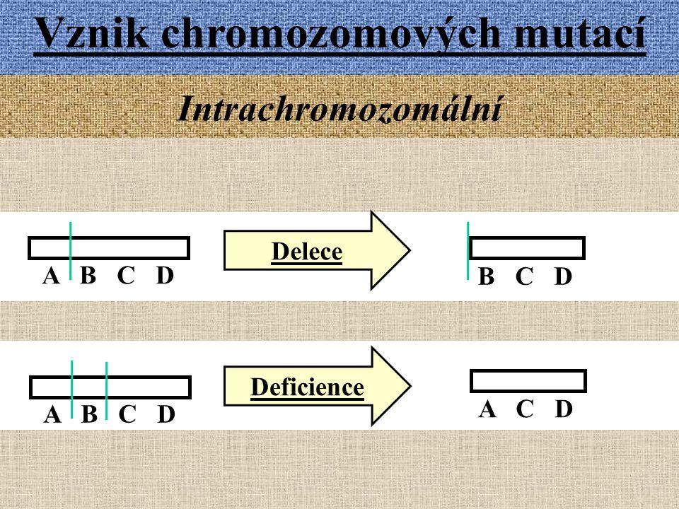 Vznik chromozomových mutací