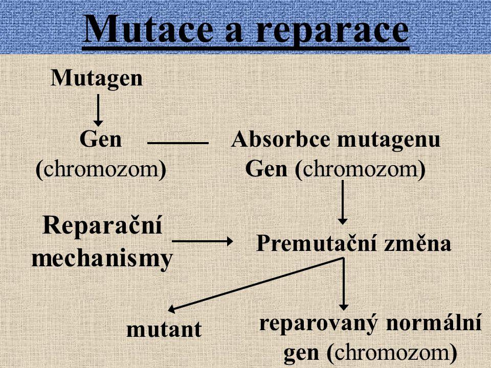 reparovaný normální gen (chromozom)