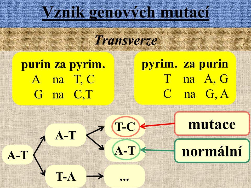 Vznik genových mutací mutace normální Transverze purin za pyrim.