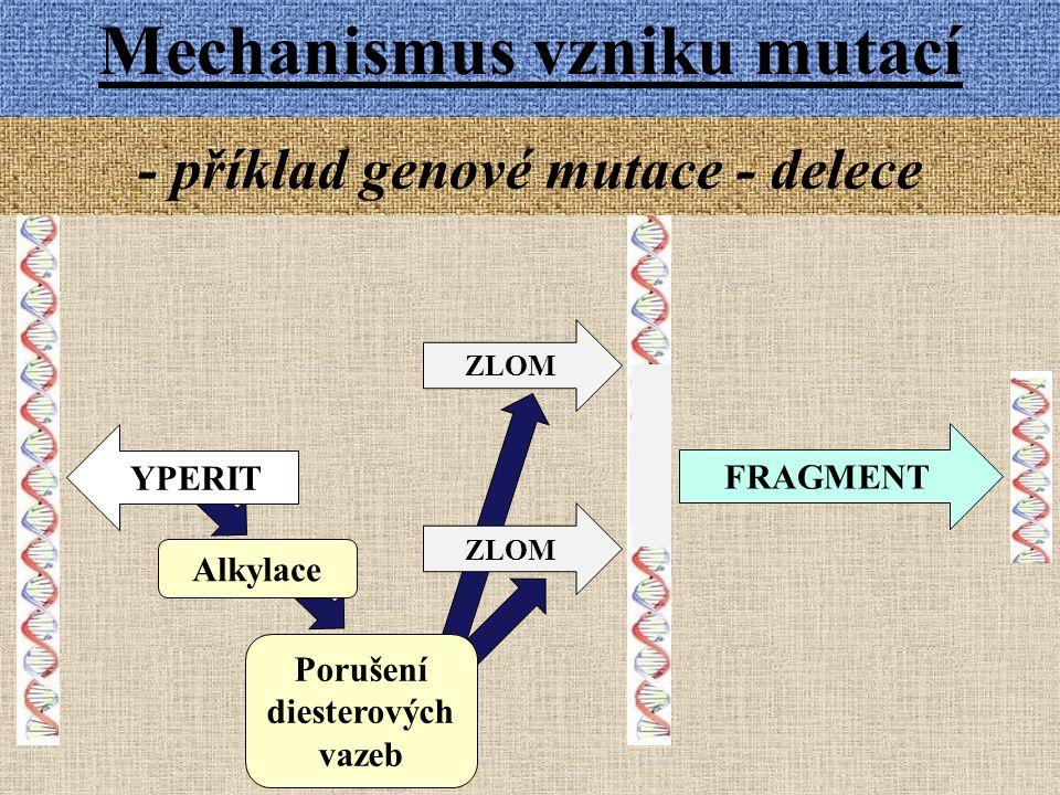 - příklad genové mutace - delece