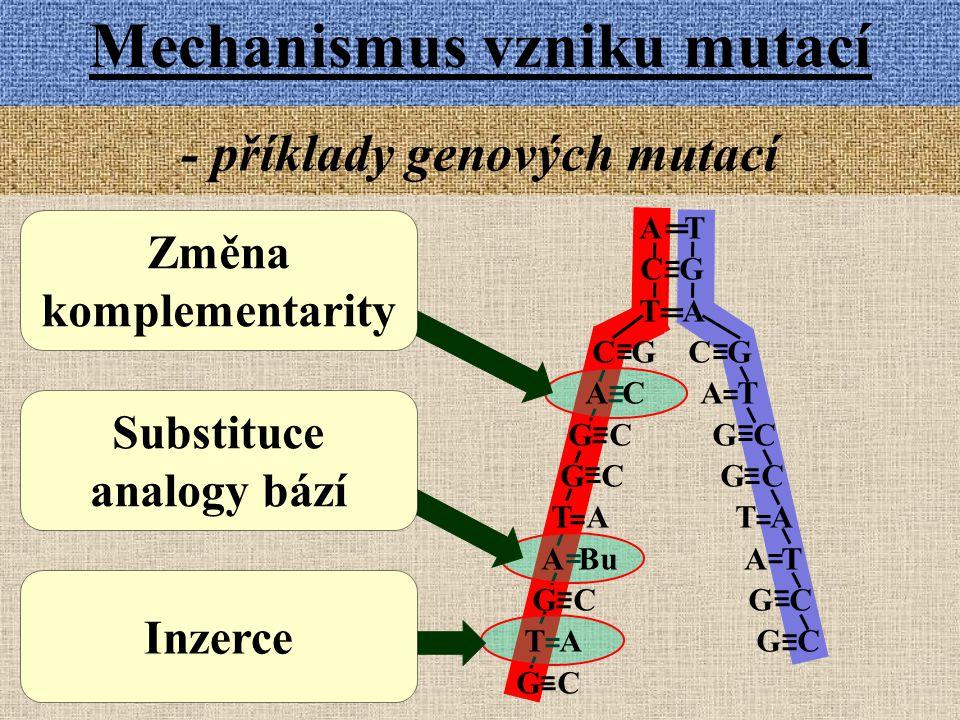 - příklady genových mutací