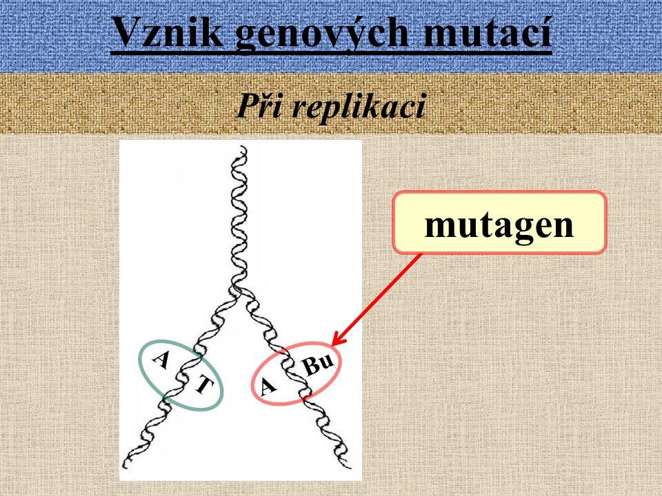 Vznik genových mutací Při replikaci mutagen A Bu A T