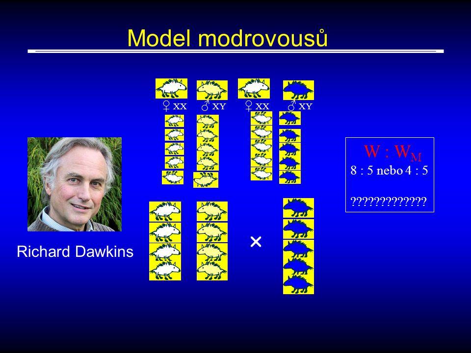 Model modrovousů  Richard Dawkins W : WM 8 : 5 nebo 4 : 5