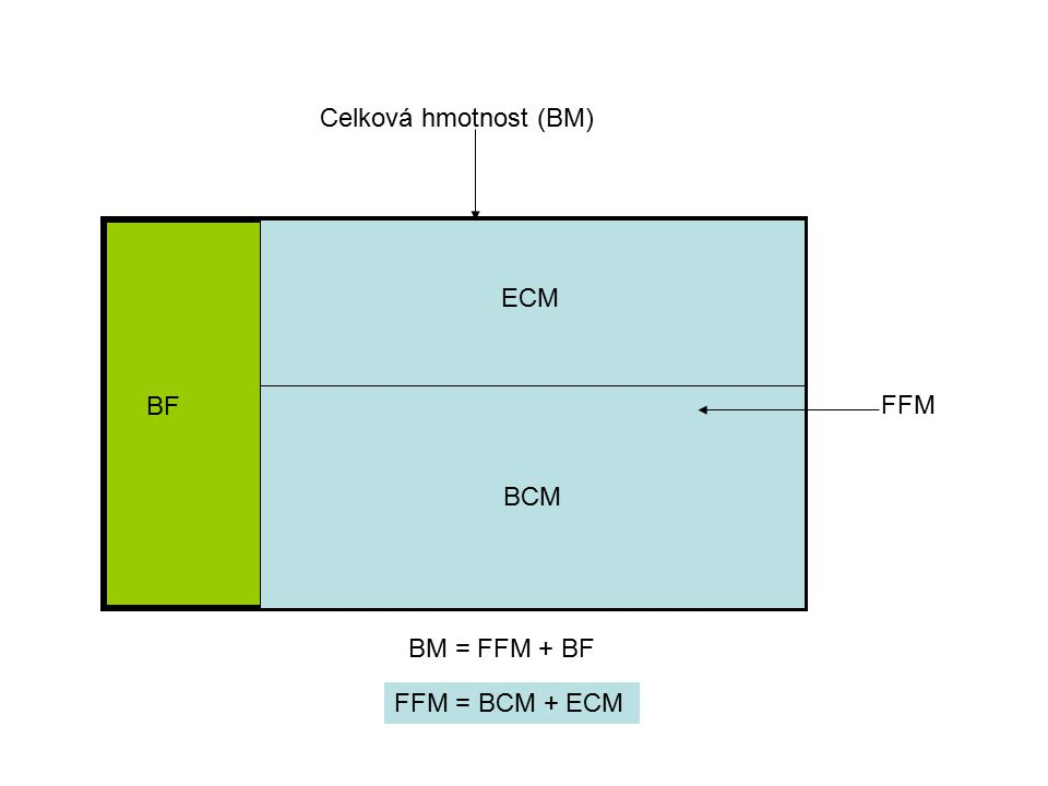 Celková hmotnost (BM) ECM BF BCM FFM BM = FFM + BF FFM = BCM + ECM