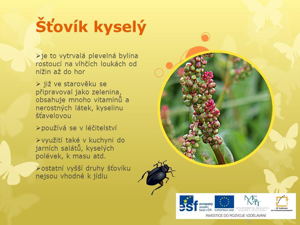 Šťovík kyselý je to vytrvalá plevelná bylina rostoucí na vlhčích loukách od nížin až do hor.
