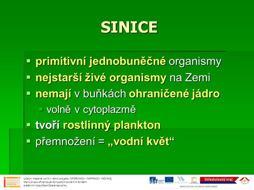 SINICE primitivní jednobuněčné organismy