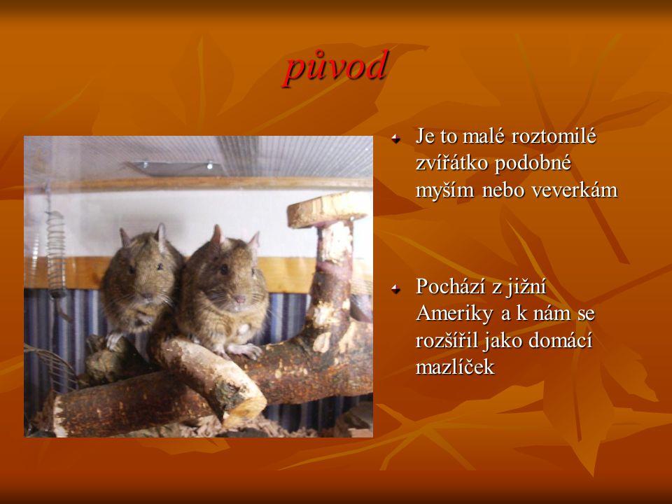 původ Je to malé roztomilé zvířátko podobné myším nebo veverkám