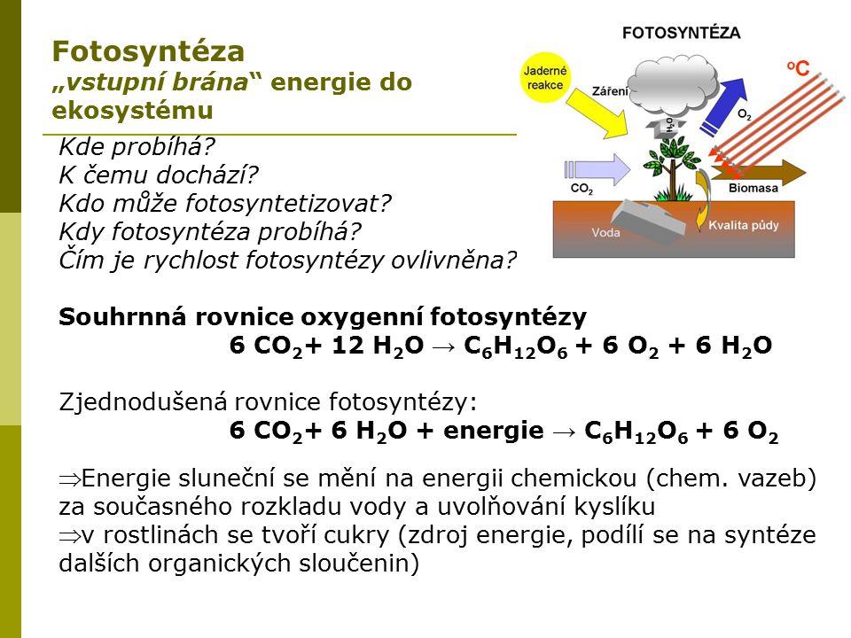 """Fotosyntéza """"vstupní brána energie do ekosystému Kde probíhá"""