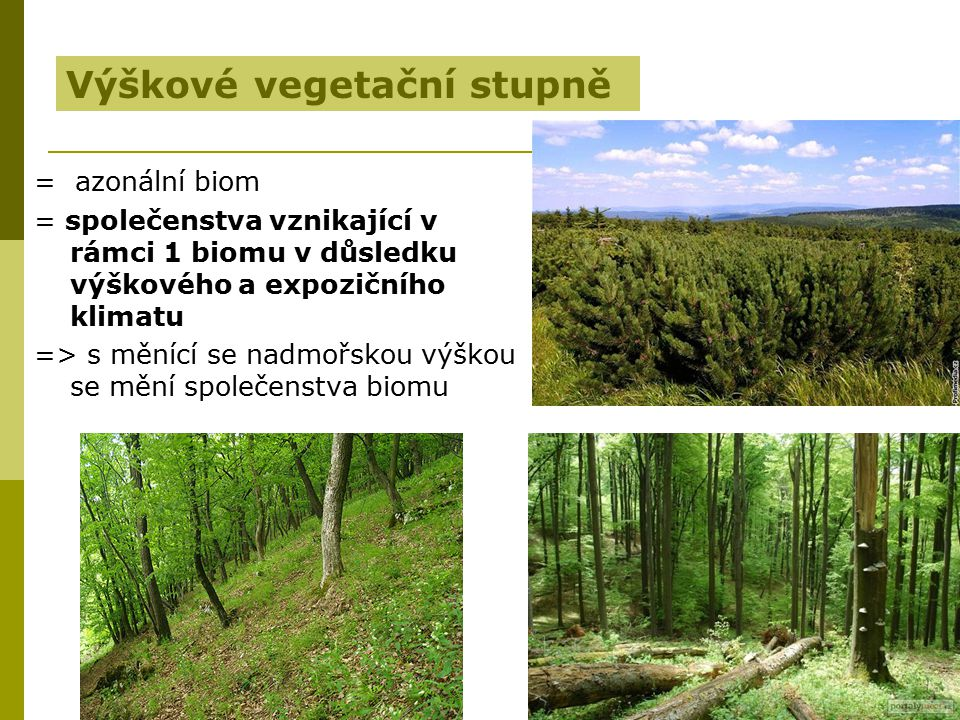 Výškové vegetační stupně