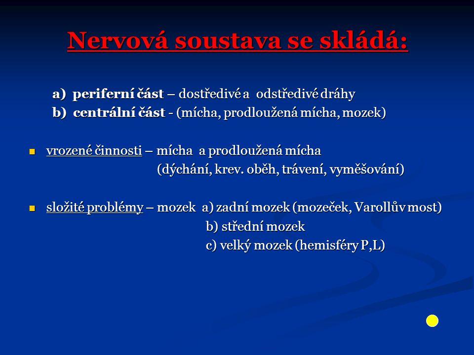 Nervová soustava se skládá: