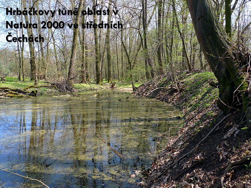 Hrbáčkovy tůně oblast v Natura 2000 ve středních Čechách