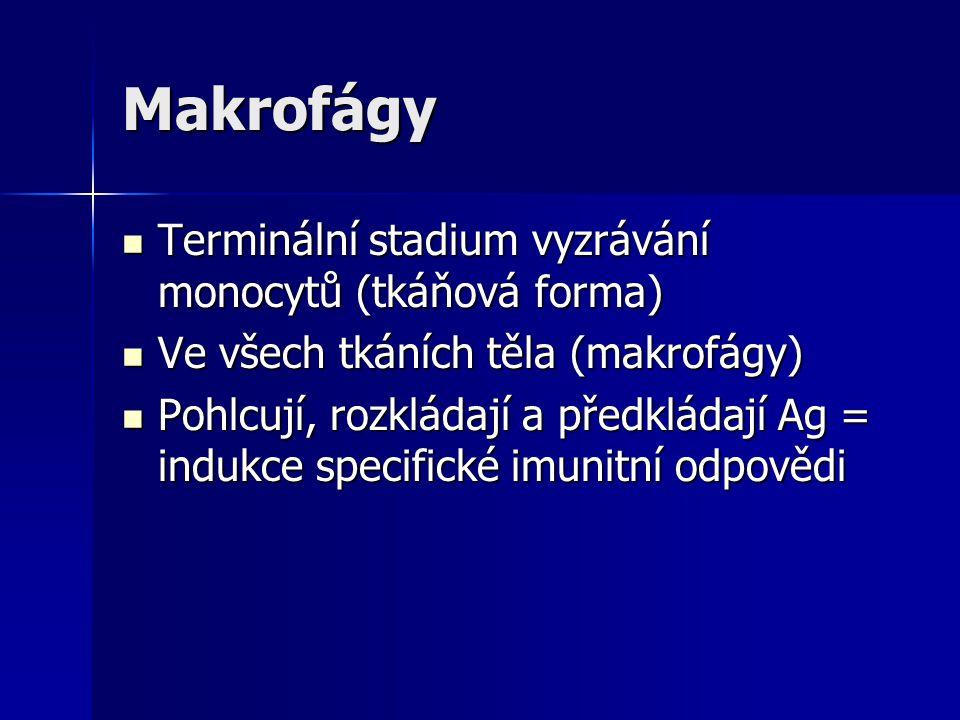Makrofágy Terminální stadium vyzrávání monocytů (tkáňová forma)