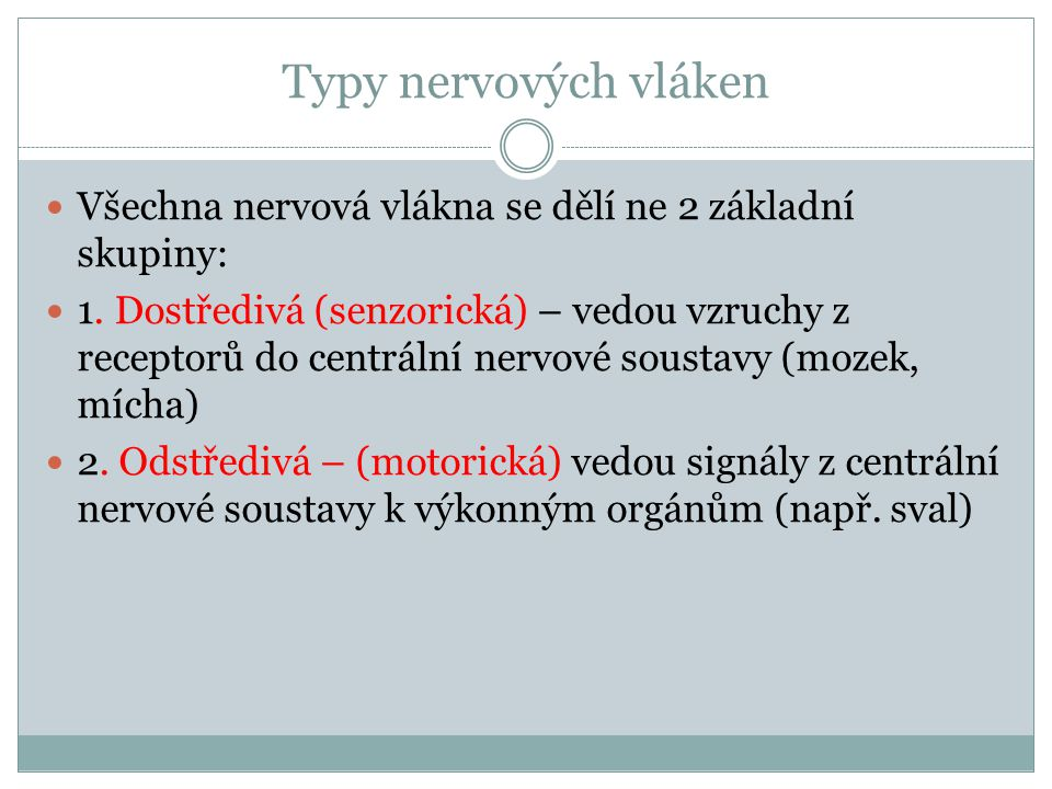 Typy nervových vláken Všechna nervová vlákna se dělí ne 2 základní skupiny: